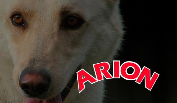 ARION: Programa nutricional completo para cada etapa y actividad en la vida del perro.