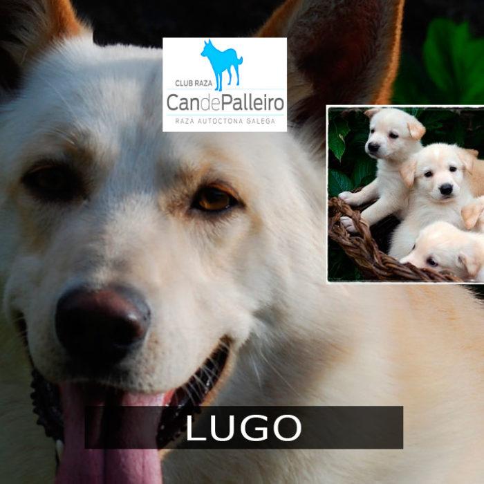 Lugo: Muimenta (Cospeito)
