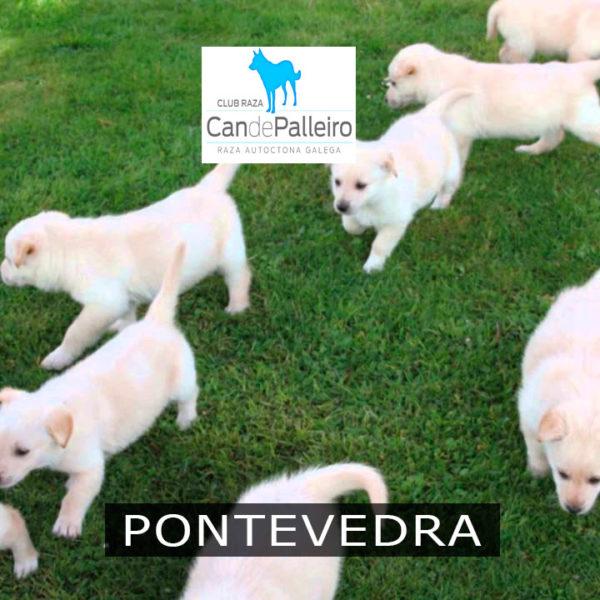 Pontevedra: Vigo