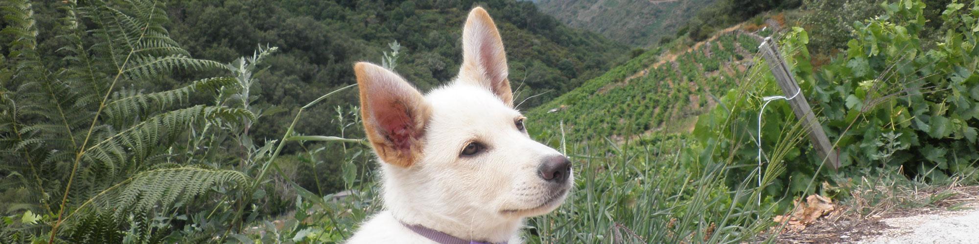 Características generales del Can de Palleiro
