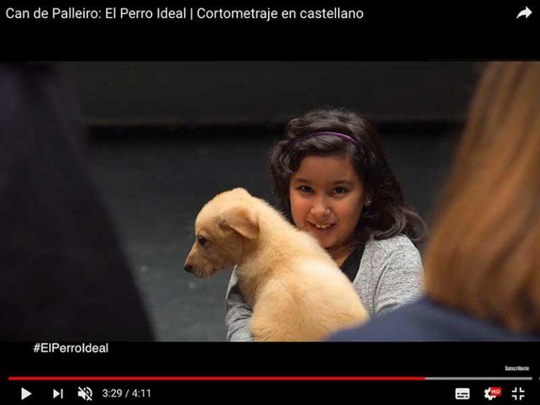 Campaña Can de Palleiro, el perro ideal