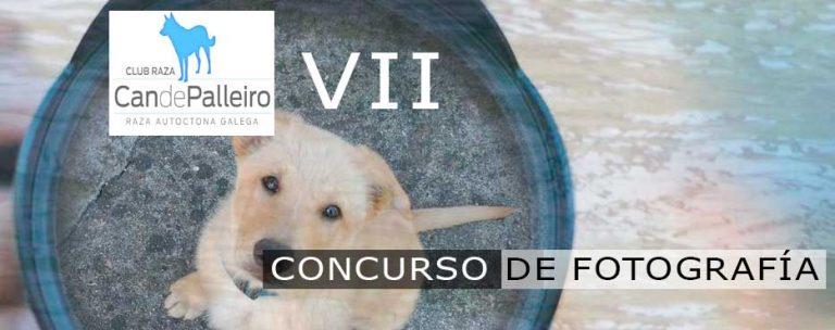 VII Concurso de Fotografía