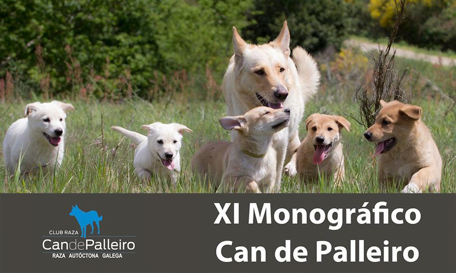 XI Monográfico Can de Palleiro