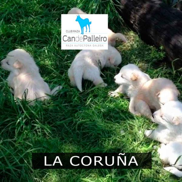 La Coruña: Culleredo