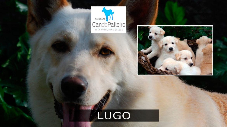 Lugo: Guitiriz y Bóveda
