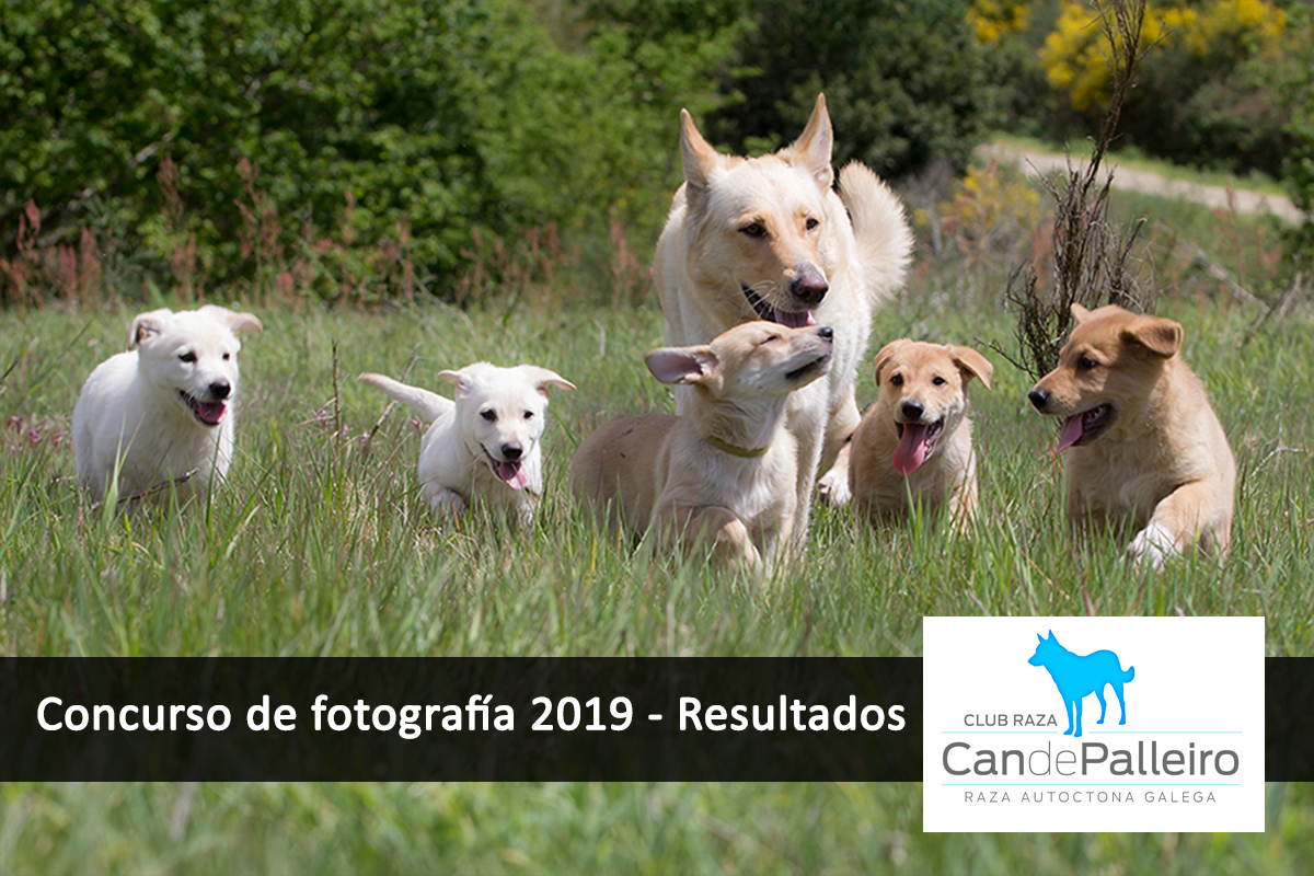 can-de-palleiro-concurso-fotografía-resultados