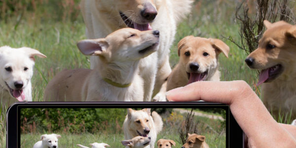"""IX Concurso de fotografía """"Can de Palleiro"""""""